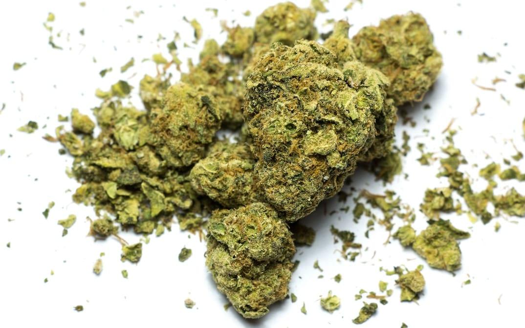 Space Queen marijuana sativa cannabis room