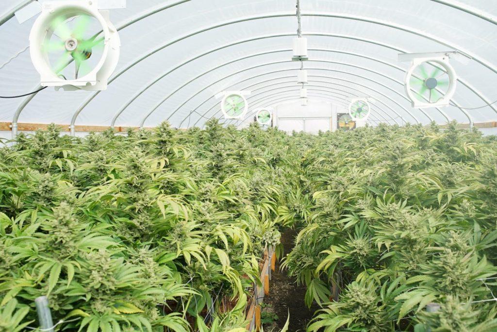 Washington Cannabis Waste