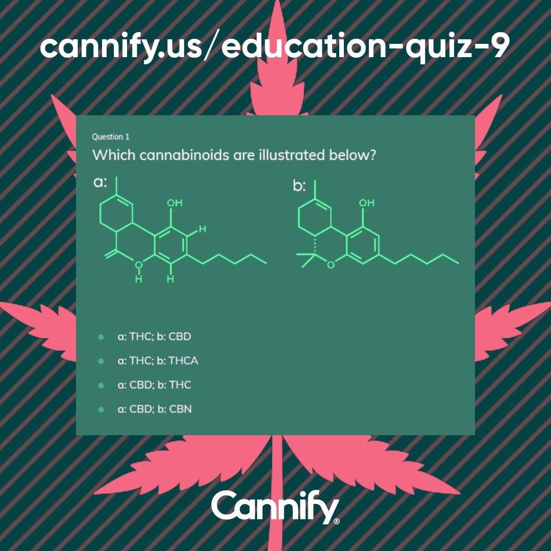 cannify quiz free account